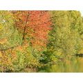 river autumn trees colours
