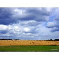 Countryside Sky clouds Bales hay