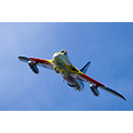 Miss Demeanour Hawker Hunter RAF Fighter Aircraft