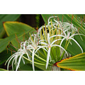 Flowers of Ho'omaluhia