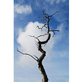 tree bare wood sky blue branch