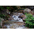 nature jungle green forest water stream waterfall rocks stones sand