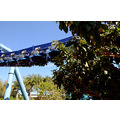 seaworld orlando florida ride manta coaster