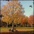autumn trees park