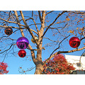ornaments decorations oakland tree sky holiday holidayfph