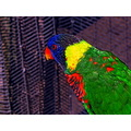 lorikeet wildanimalpark park escondidoca sandiegoca canon powershot sx20is