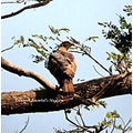 eagle haliyal fort park karnataka india