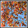 blackgum tree fall leaves