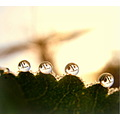 dawnfriday dew drop morning