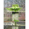 fence post moss green