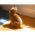 josefina orange cat smudgestick filter orangecat filters filtersfph