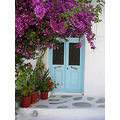 blue door bougainvillea