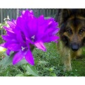 flower nature dog green purple animal