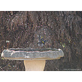 bird honeyeater birdbath garden perth littleollie