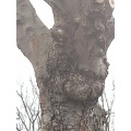 I thought this tree had character. I saw a unicorn when I looked at it.  My friends see a rabbit ...