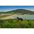 horse sea beach mountain landscape seascape