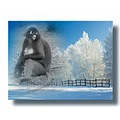 picjoke langkawi winter monkey netherlands langx nethx wintx monkx