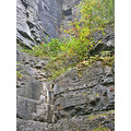 albanyfph thacher park thacherpark autumn indianladder trail landforms