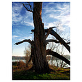 colours light old tree danube river