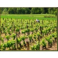 wineyard France spring may landscape winegrower