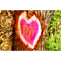 heart tree nature