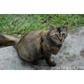 cat animal portrait taiping