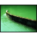 green water wall