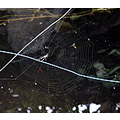 spider web insects pond fish orange