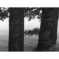 nature lake trees BW