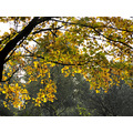 Series Autumn Trees Colors Almelo