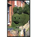 hedge topiary smile