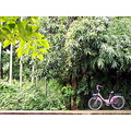 landscape nature thailand poulets 2007 bicycle