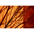 Art branches ARCO nature abstract
