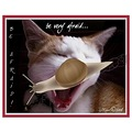 cat feline animal fear terror snail spoof