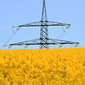 rapeseed high voltage power line