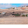 PortoSanto island Madeira Portugal 2007 holiday horse mountains dry