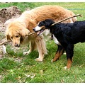 france fontainebleau animal dog oumar cenna friendshipfriday franx fontx dogx