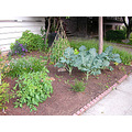 berkeley garden vegetable pocketgardenfph vegetables