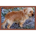 Honey rescue dog new pet companion poppy