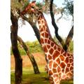 giraffe safari ride Disney Florida Orlando USA walt world wildlife nature animal