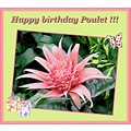 Exotic flower for our flower girl :-)  Happy birthday dear Poulet !!! Manny happy returns of t...