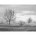 landscape winter field hill tree bush celestial phenomenon sky clouds bw