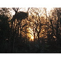 trees sun sunset