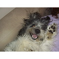 Doggie cute high five pretty messy loved
