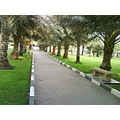 Dates Palm Dubai Uae Park Sharjah