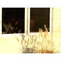 refledtionthursday window grass shadow reflection