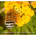 entomology insect reserve spain alora hill nature wild life helpx uni bug