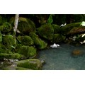 nature moss pool water rocks green