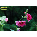 xiangshan outdoor bee flower nature