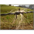 hair horse France autumn field nature fence macro
